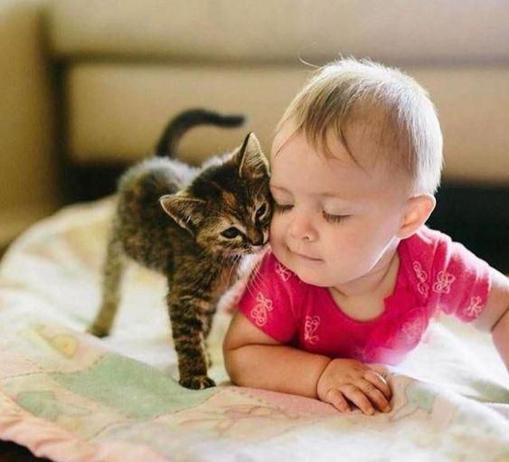 Общение с кошками в детстве увеличивает шансы формирования иммунитета