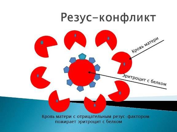 Уничтожение материнскими антителами крови плода
