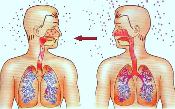 Заразиться мононуклеозом можно при непосредственном контакте с инфицированным человеком