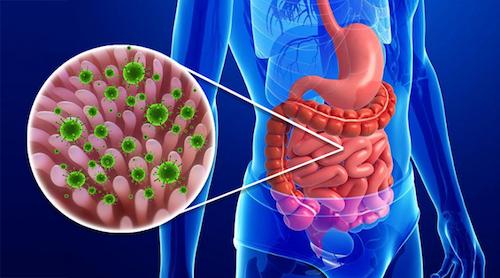 Развитие инфекции в кишечнике