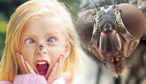 В чем особенность насекомых