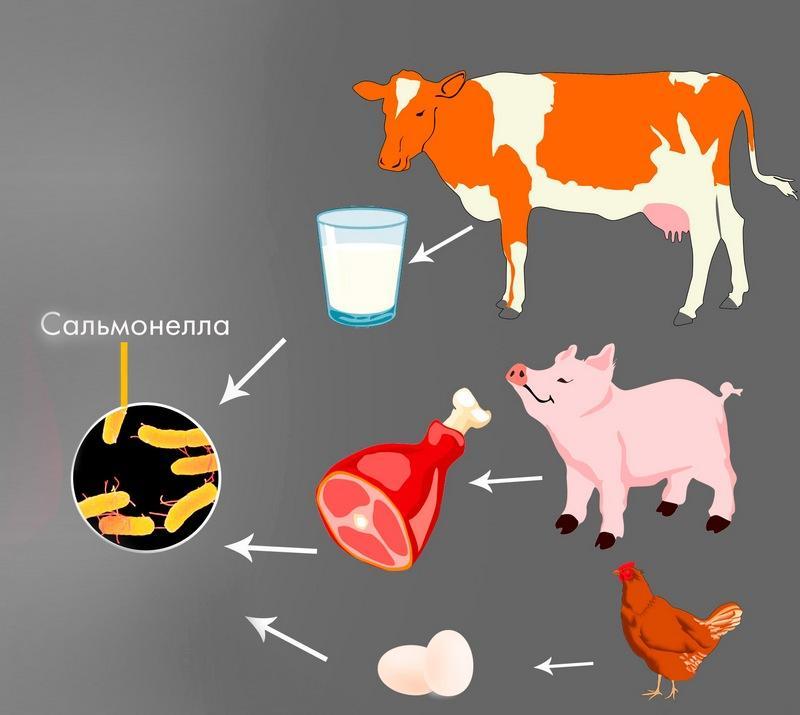 Сальмонелла в продуктах питания