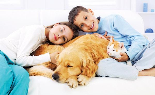 Вши не передаются человеку от собак и кошек