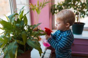 Дети и комнатные растения