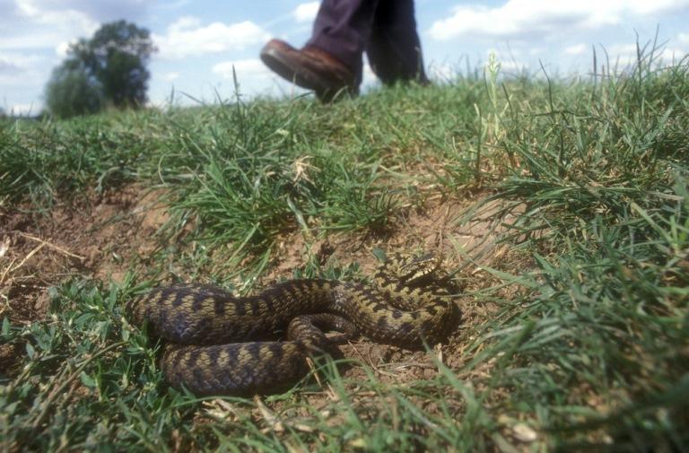 Где можно встретить змею