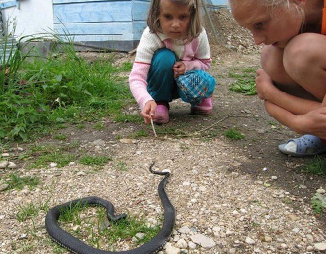 Нельзя трогать змей